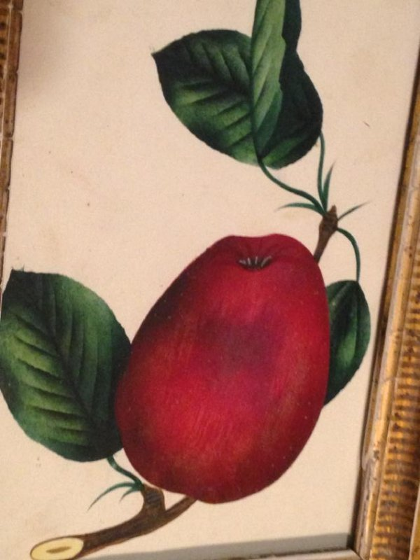 C1850 Original Watercolor/ Theorem Gold Leaf Frame - 2