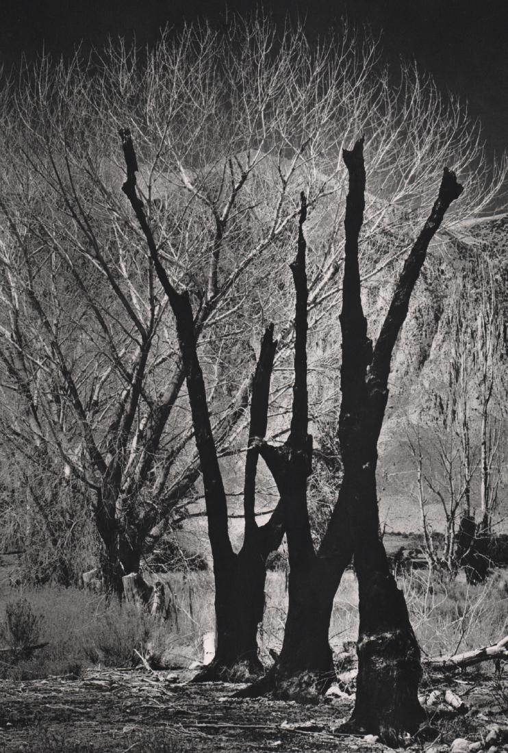 ANSEL ADAMS - Owens Valley