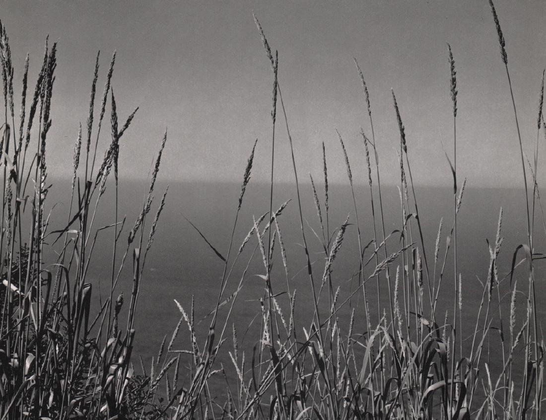 EDWARD WESTON - Grasses and Pacific