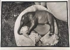 After Peter Beard Photo Untitled (Ele Embryo, Uganda,