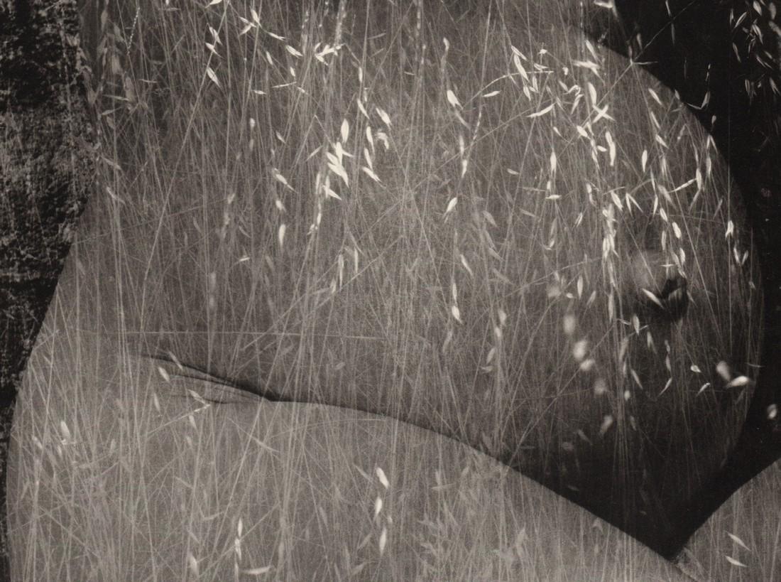 RUTH BERNHARD - Harvest, 1953