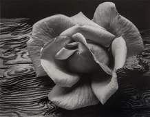 ANSEL ADAMS - Rose and Driftwood, San Francisco, 1932