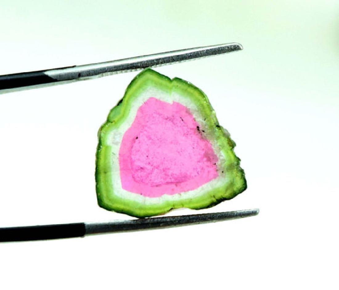 7.75 Carats Watermelon Tourmaline Slice from Paprok -