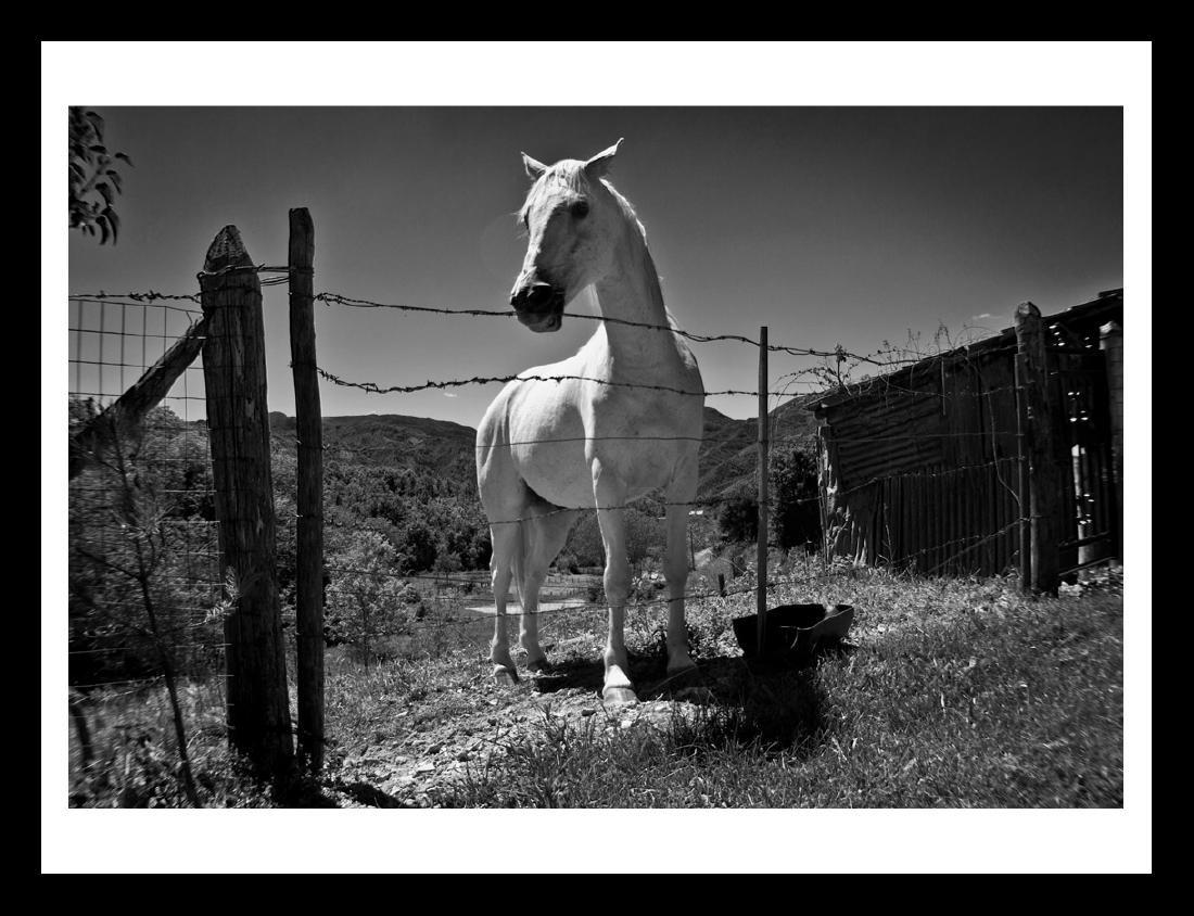 Emanuele Cucuzza Photograph Smiling Horse - Ed.1/15