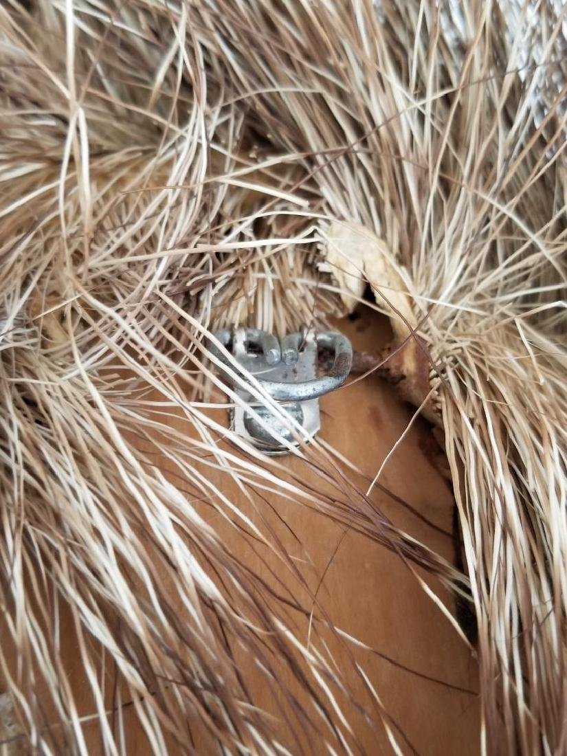 Studio Wild Boar Taxidermy Head With Wall Mounting Hook - 4