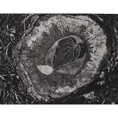 ANSEL ADAMS - Leaf, Frost, Stump - October Morning
