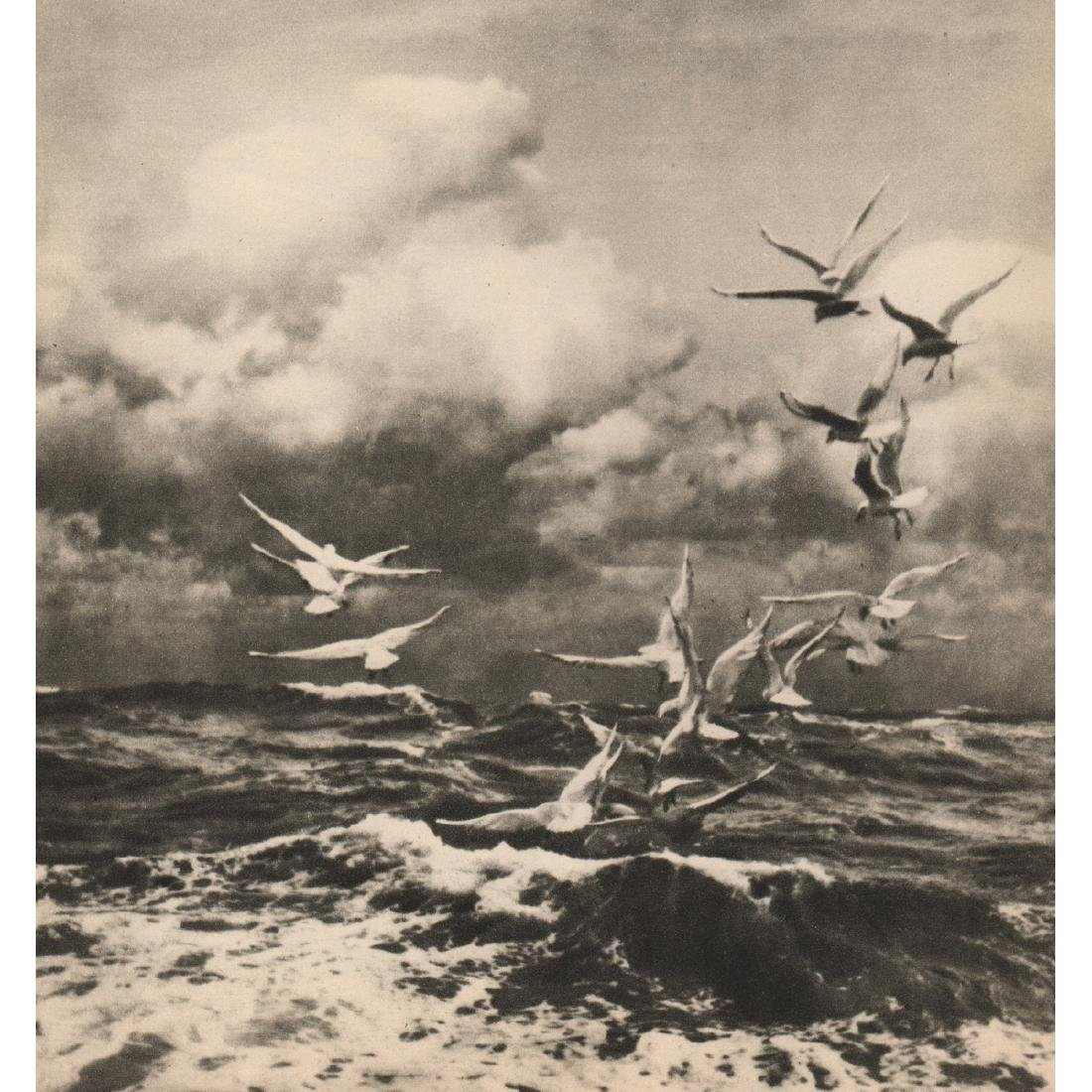 F. J. MORTIMER - A Sea Banquet