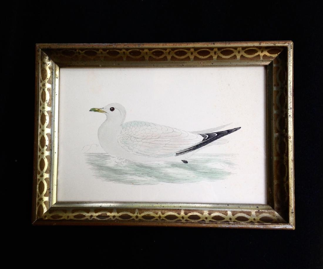C1840 Hand Colored Seagull Engraving Gold Leaf Frame