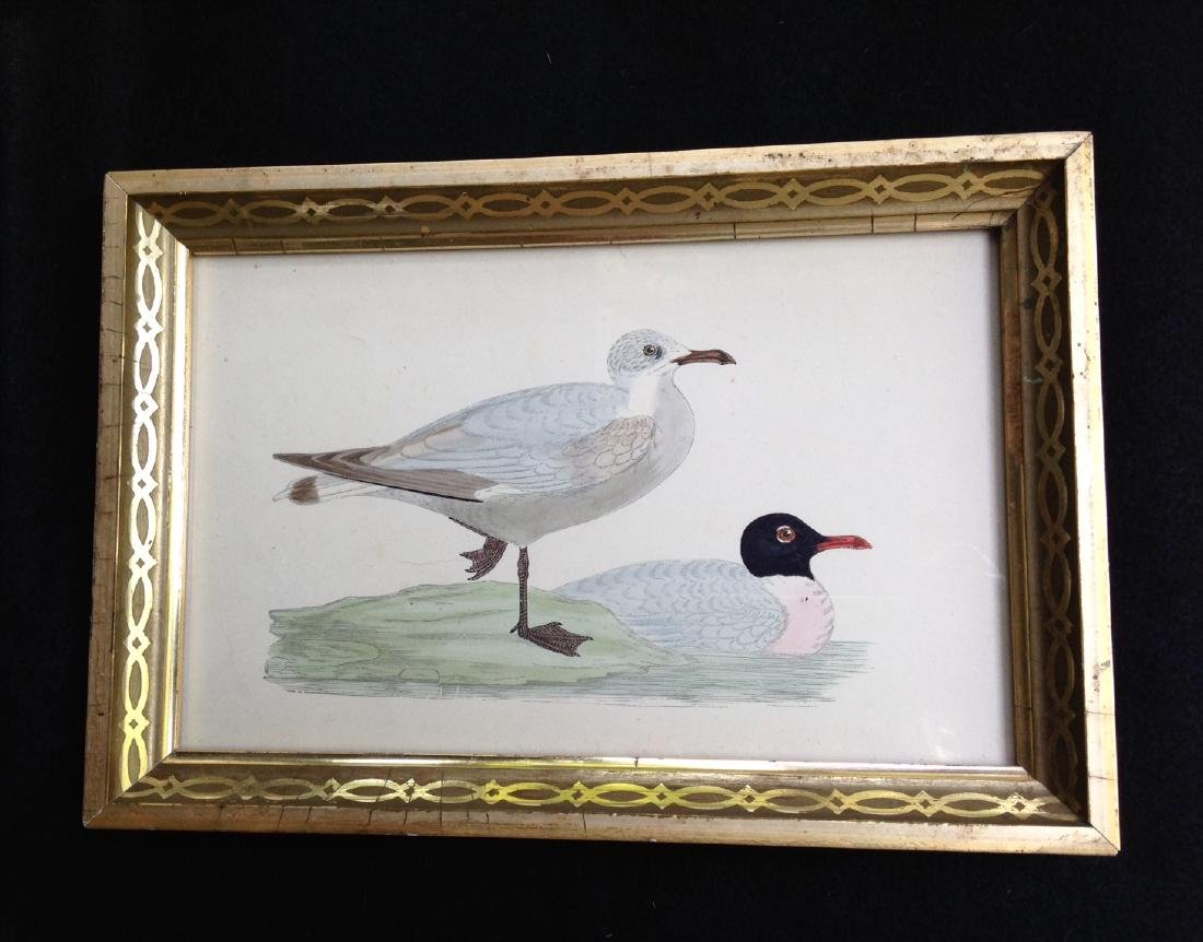 C1840 Hand Colored Engraving in a 19thc Gold Leaf Frame