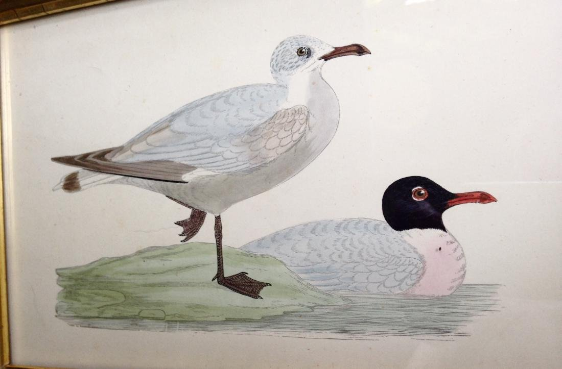 C1840 Hand Colored Engraving in a 19thc Gold Leaf Frame - 2