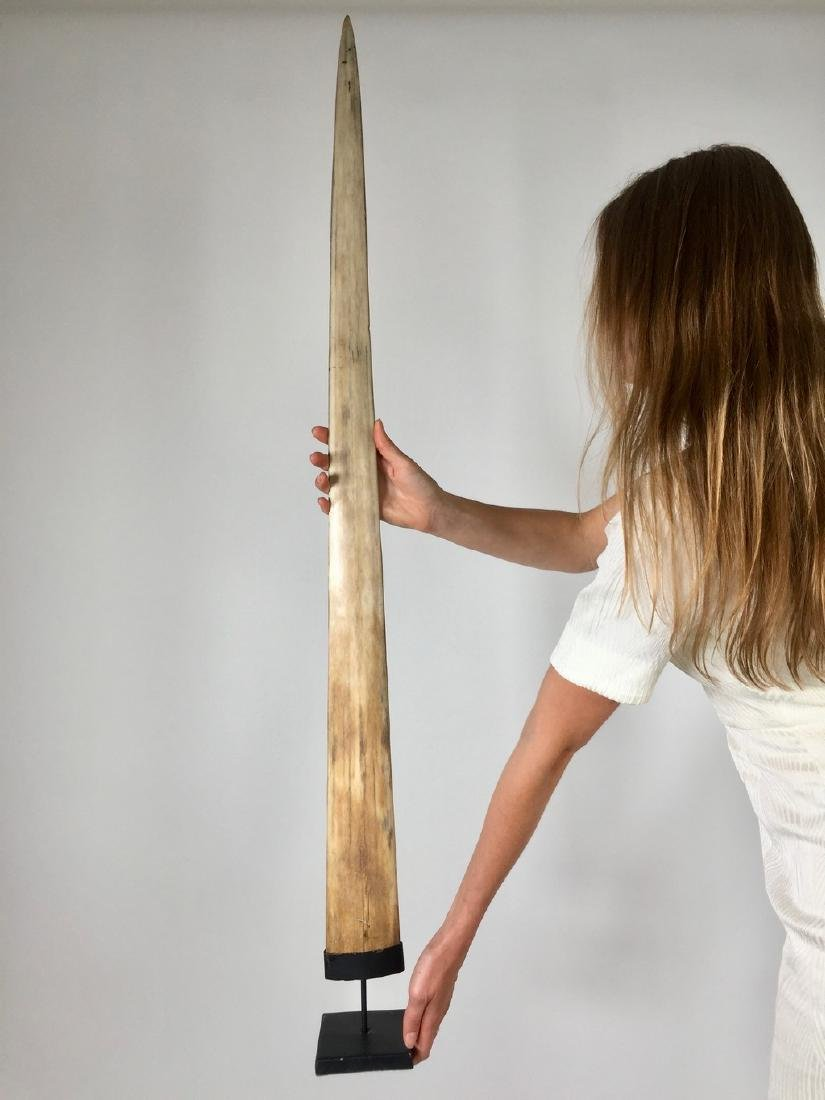 Fine Large Swordfish Tusks with custom stand