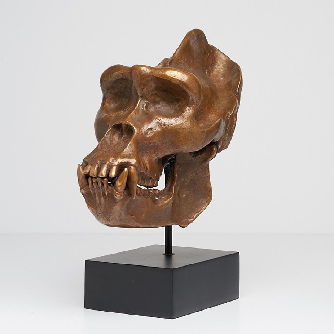 Male Western Lowland Gorilla Skull in Bronze