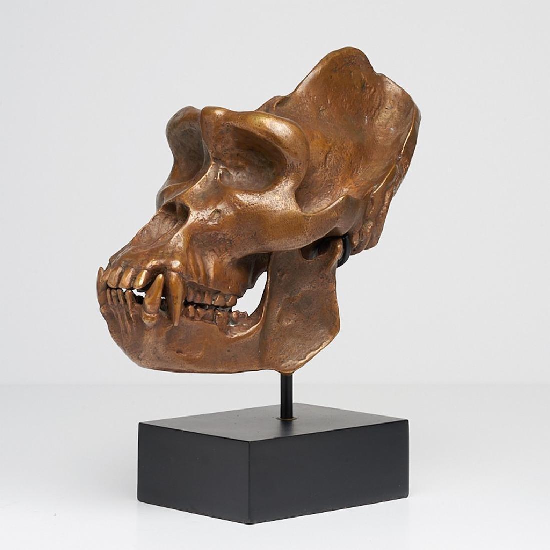 Male Western Lowland Gorilla Skull in Bronze - 2