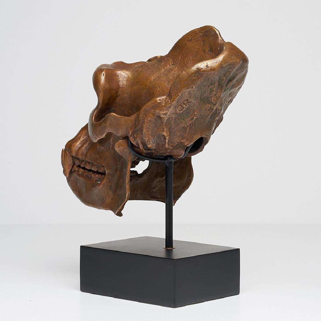 Male Western Lowland Gorilla Skull in Bronze - 4