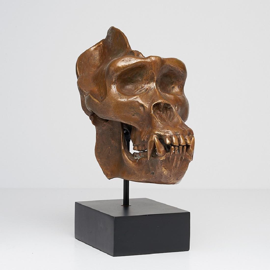 Male Western Lowland Gorilla Skull in Bronze - 6