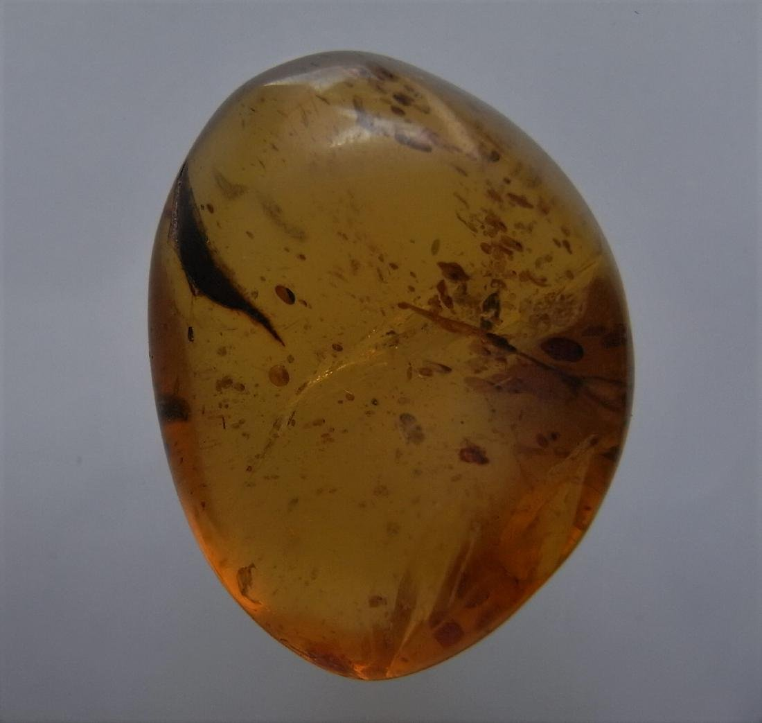 100 Mill. Years old Burmite Amber with plant part - 4