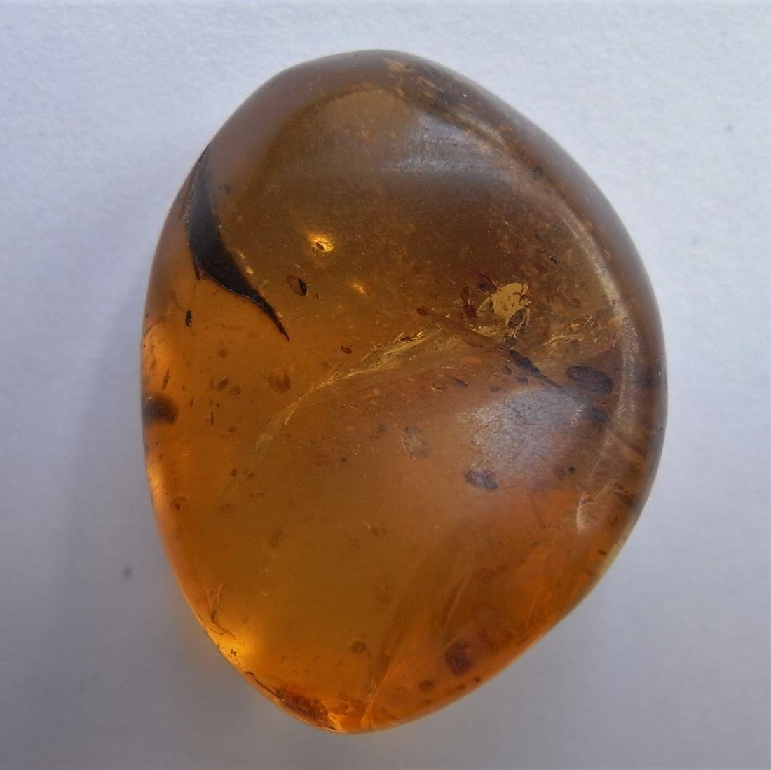 100 Mill. Years old Burmite Amber with plant part - 5
