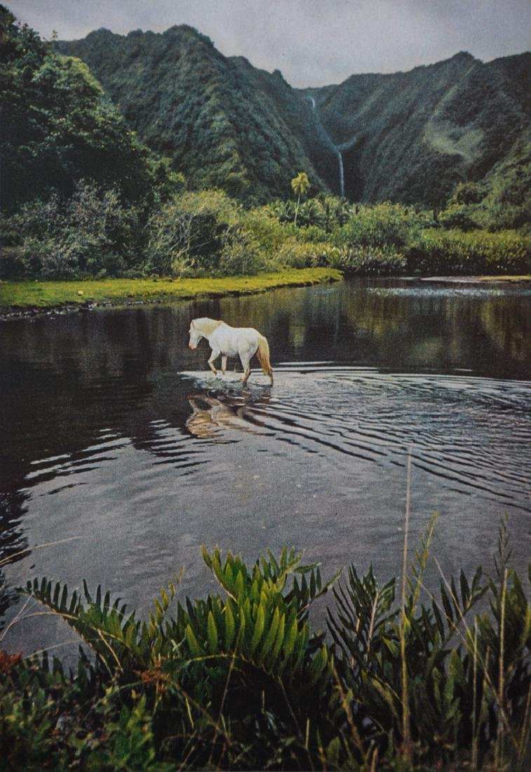 ELIOT ELISOFON - White Horse, Tahiti