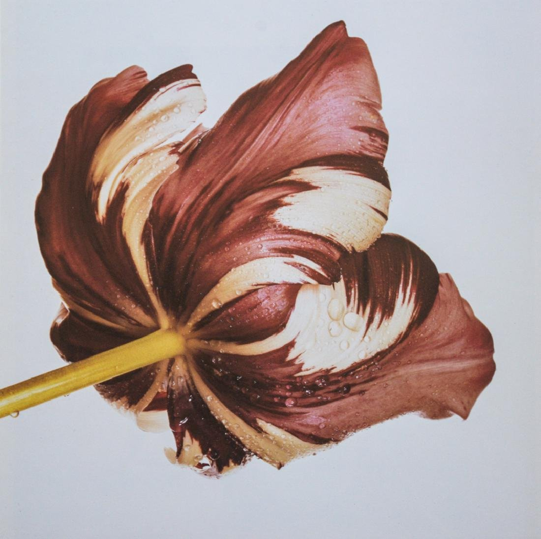 IRVING PENN - Purple Tulip