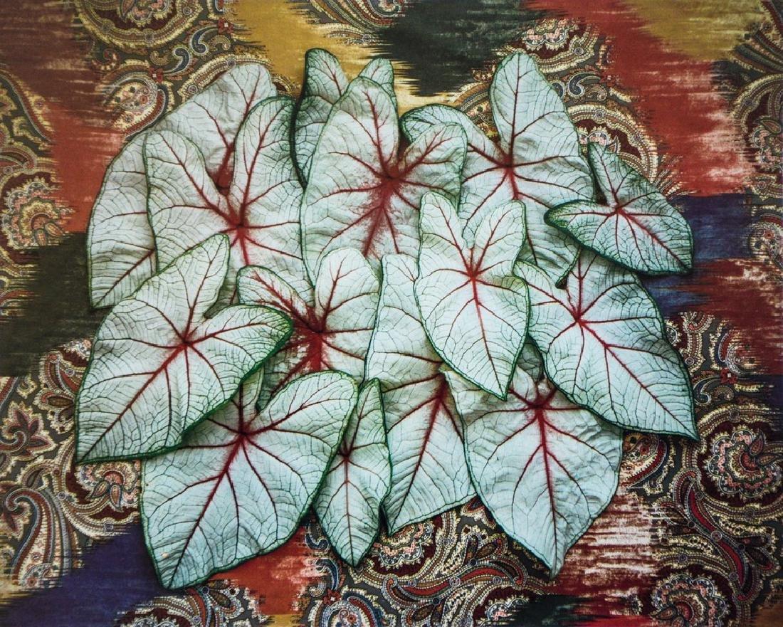 DON WORTH - Caladium Leaves, 1984