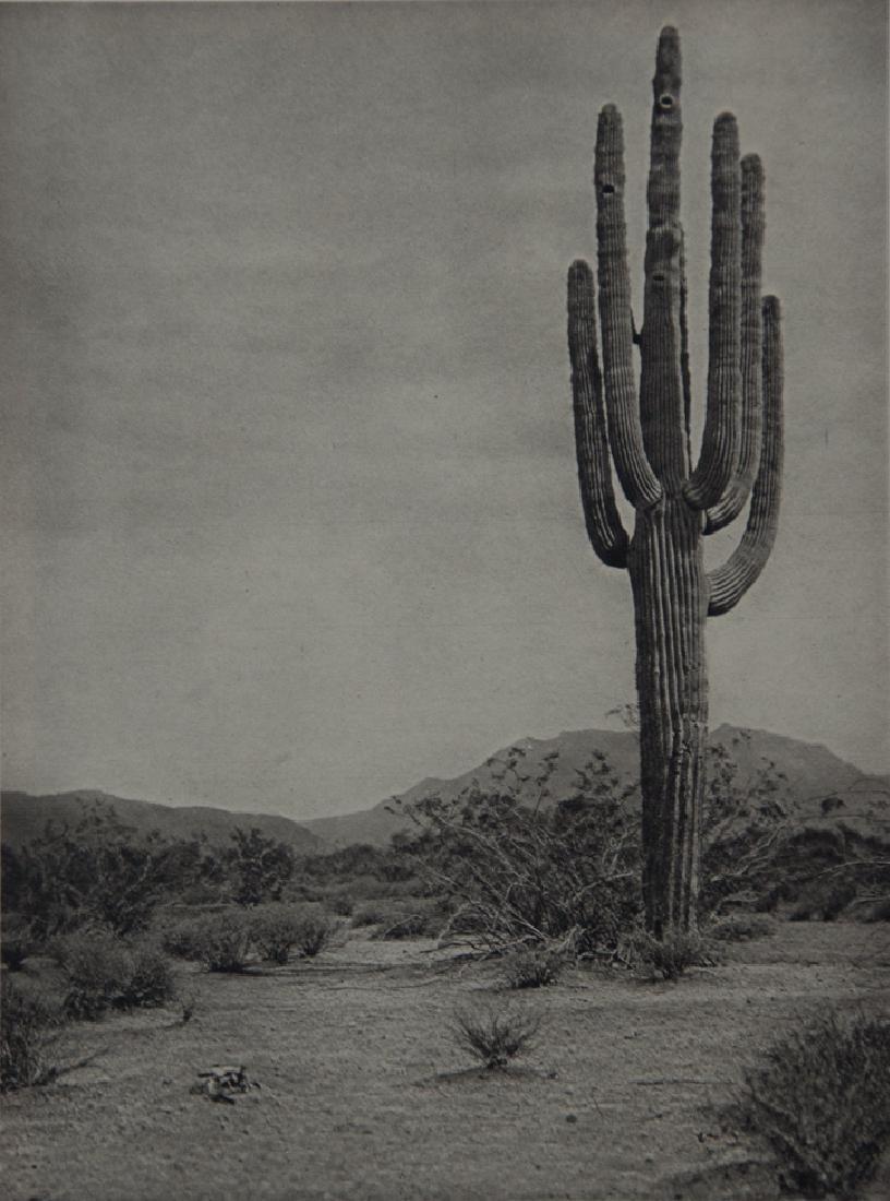 E.O. HOPPE - Giant Cactus on Apache Trail, Arizona