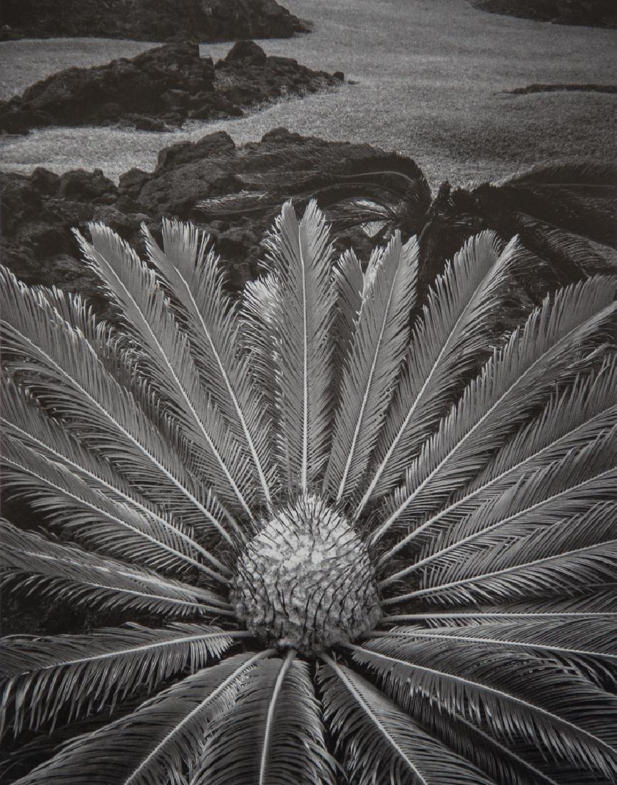 DON WORTH - Cycas revoluta, Hawaii, 1977