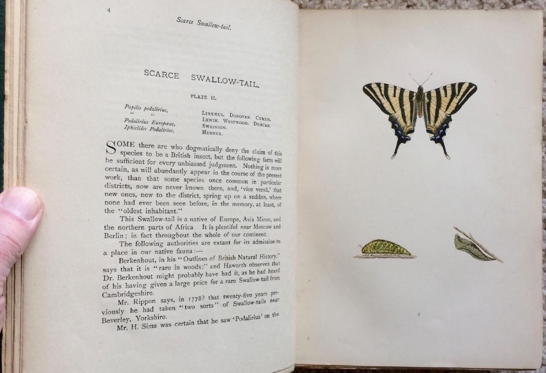 1908 F.O.Morris HISTORY of BRITISH BUTTERFLIES - 10