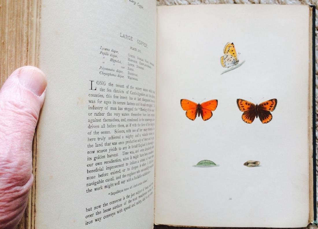 1908 F.O.Morris HISTORY of BRITISH BUTTERFLIES - 4