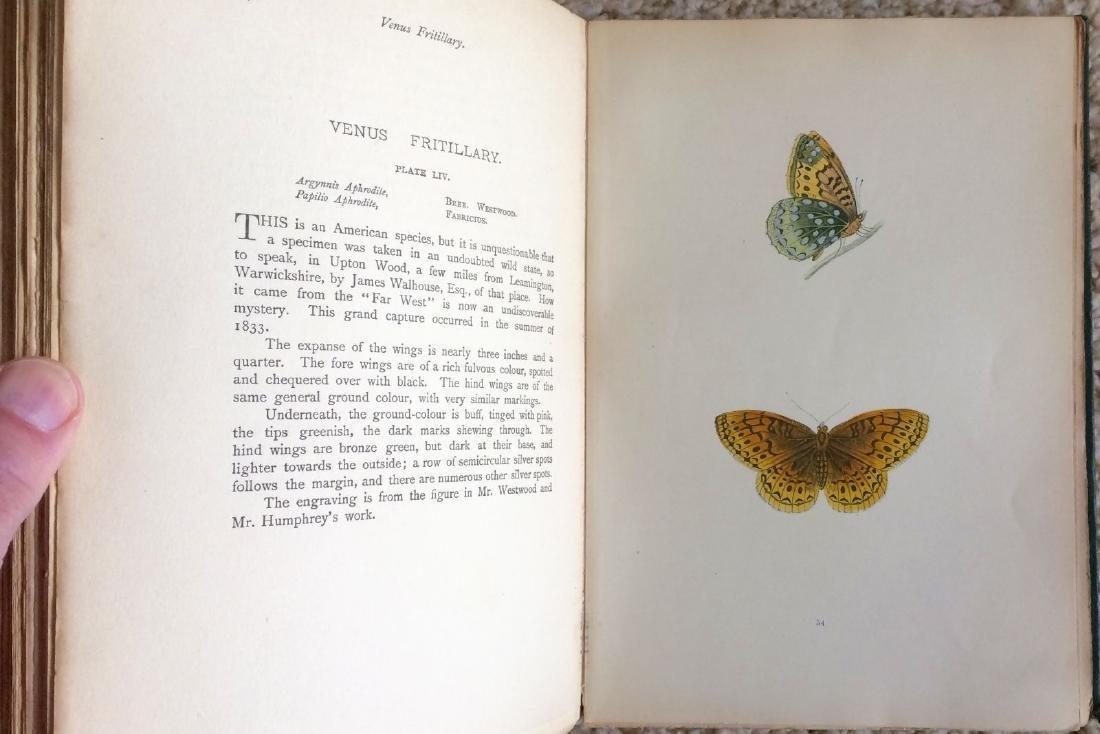 1908 F.O.Morris HISTORY of BRITISH BUTTERFLIES - 5
