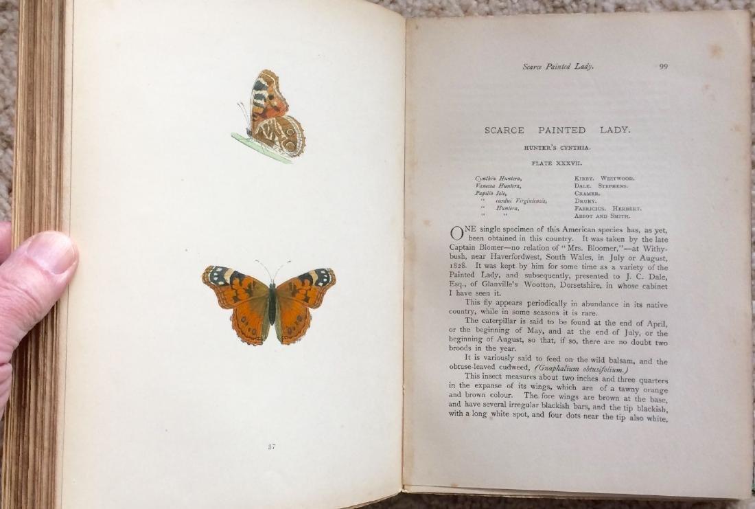 1908 F.O.Morris HISTORY of BRITISH BUTTERFLIES - 6