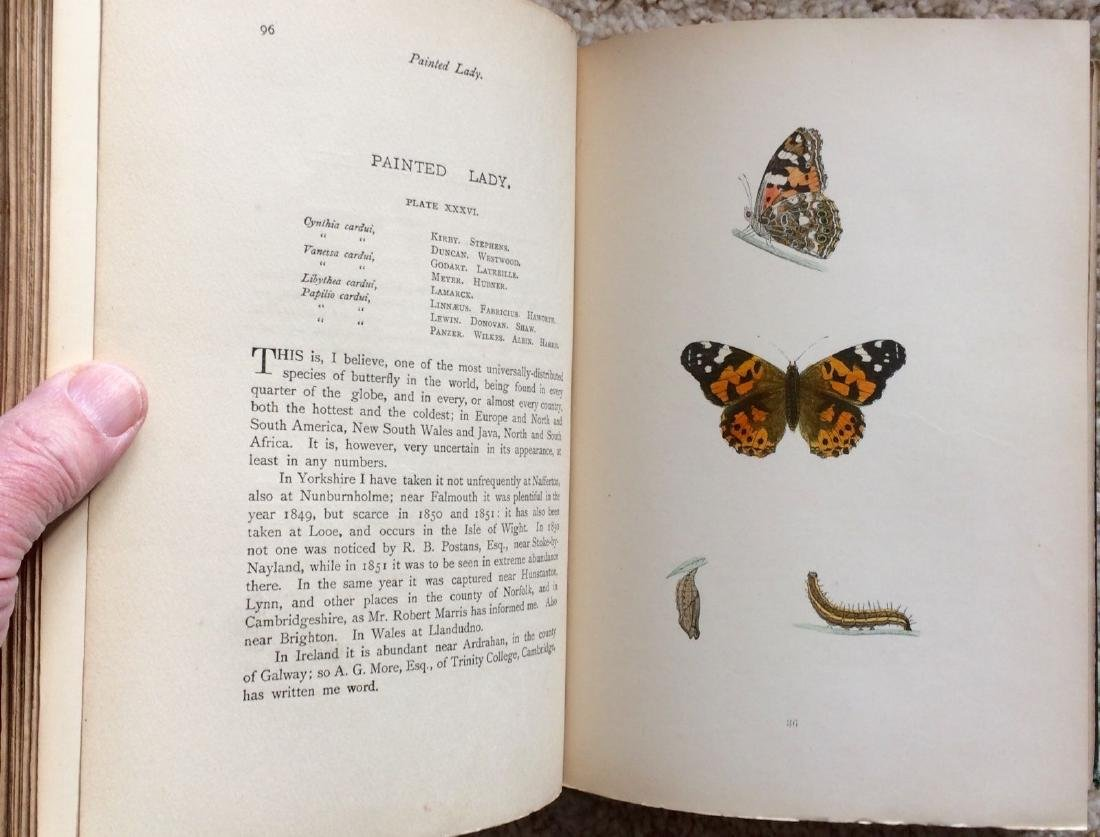 1908 F.O.Morris HISTORY of BRITISH BUTTERFLIES - 7