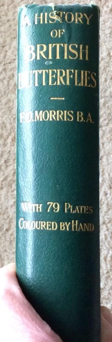 1908 F.O.Morris HISTORY of BRITISH BUTTERFLIES - 8