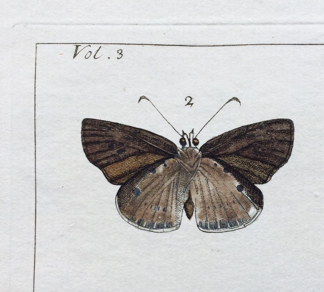 1782 Dru DRURY Vol.3 Pl 17 SKIPPER BUTTERFLIES - 10