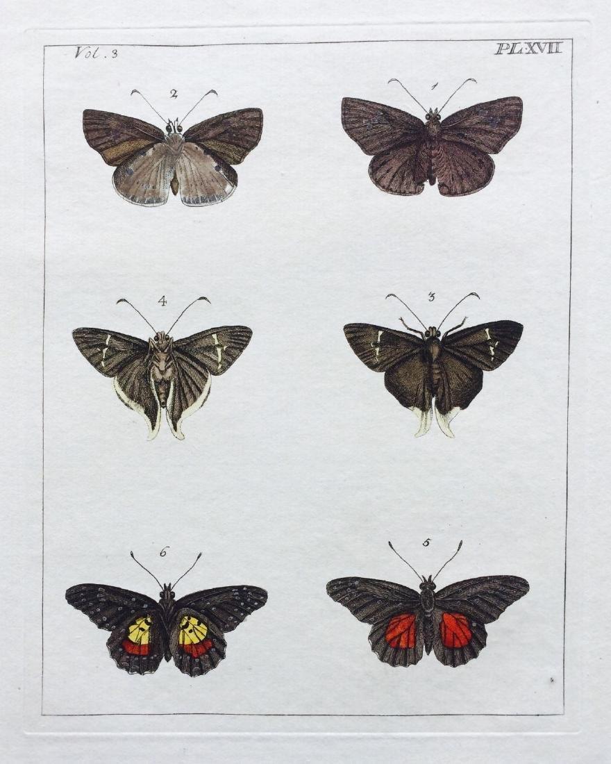 1782 Dru DRURY Vol.3 Pl 17 SKIPPER BUTTERFLIES - 2