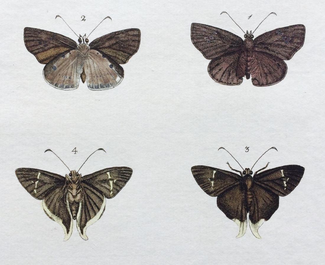 1782 Dru DRURY Vol.3 Pl 17 SKIPPER BUTTERFLIES - 3
