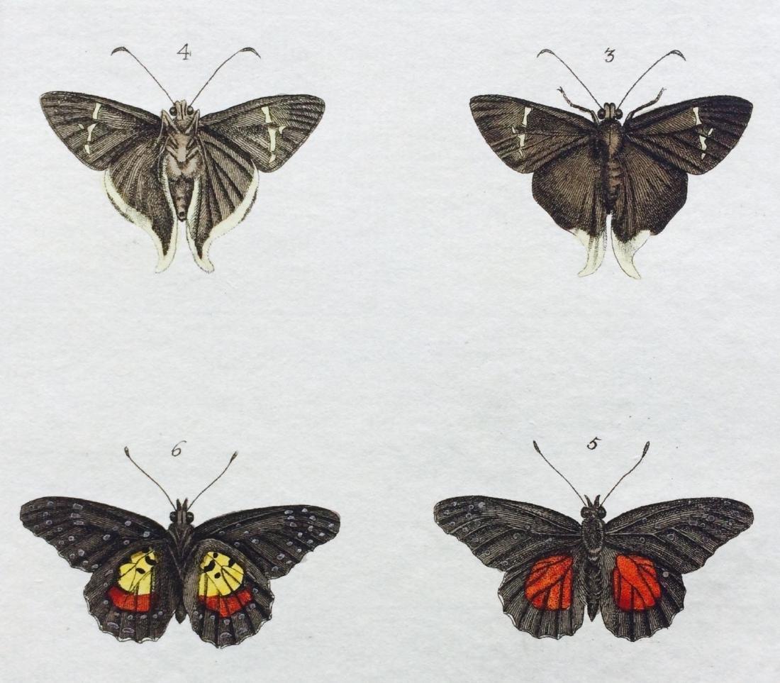 1782 Dru DRURY Vol.3 Pl 17 SKIPPER BUTTERFLIES - 5