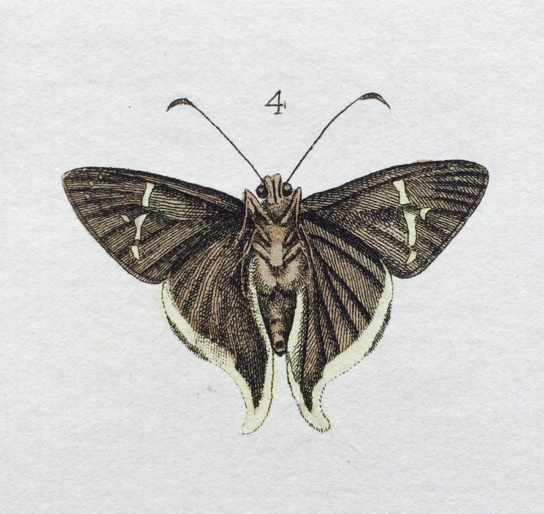 1782 Dru DRURY Vol.3 Pl 17 SKIPPER BUTTERFLIES - 7