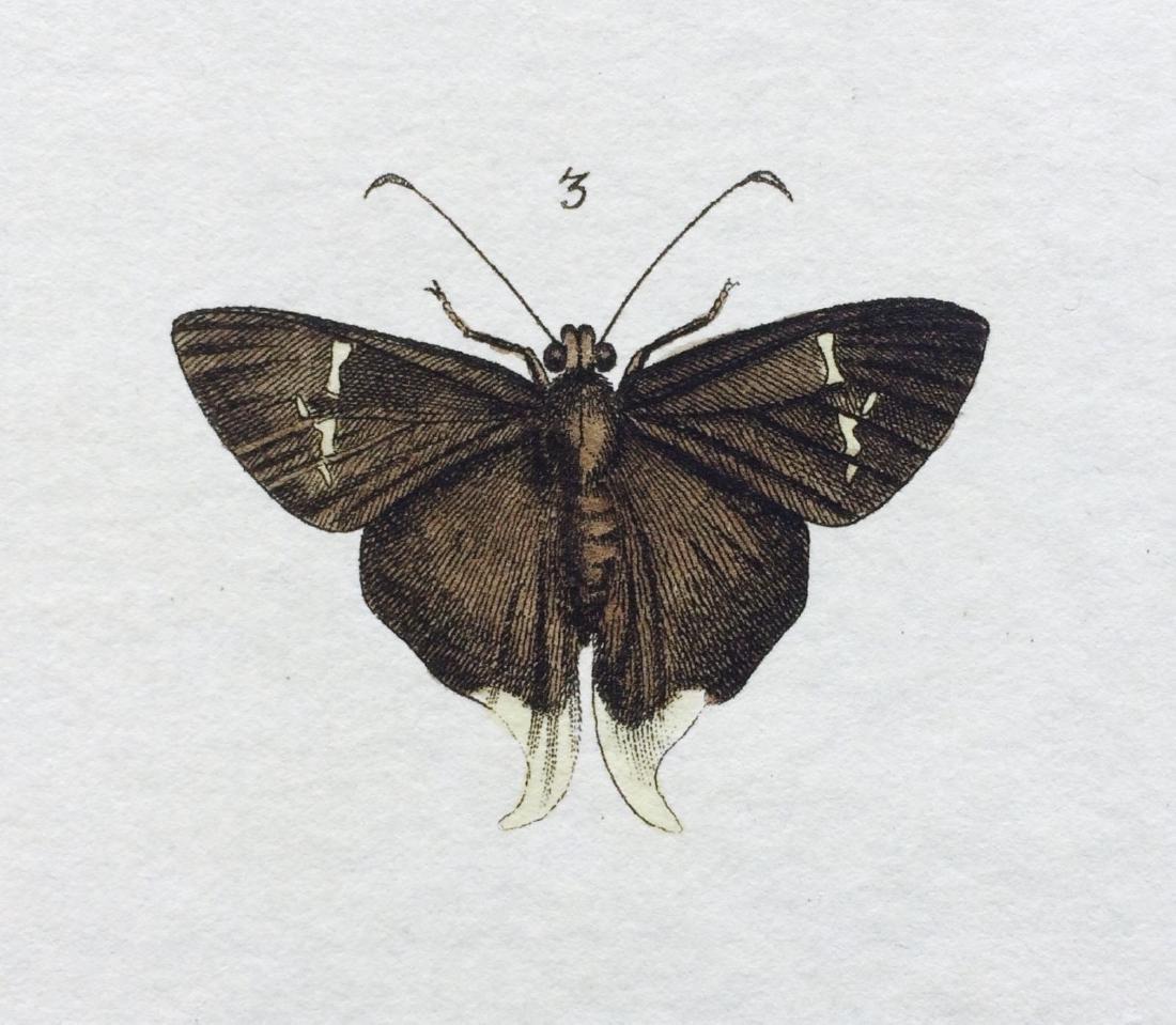 1782 Dru DRURY Vol.3 Pl 17 SKIPPER BUTTERFLIES - 9