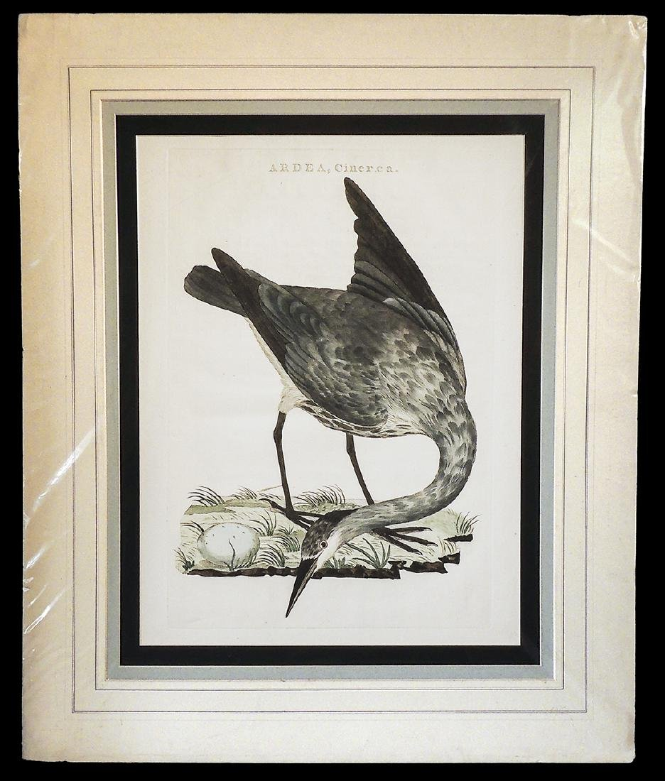 18th Century Large Copperplate Engraving