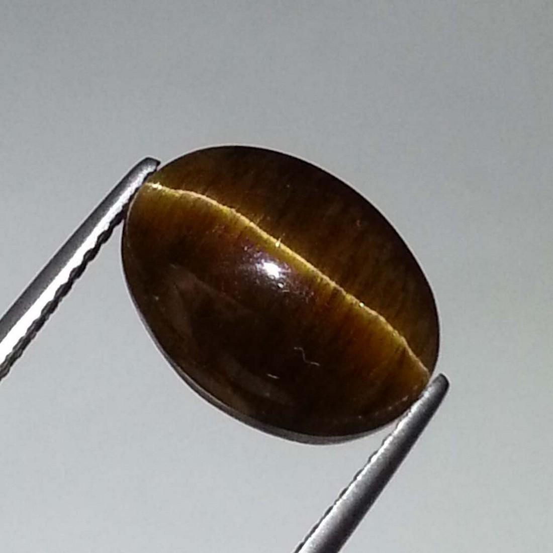 Top Grade Glowing Honey Natural Apatite cat's Eye - - 3