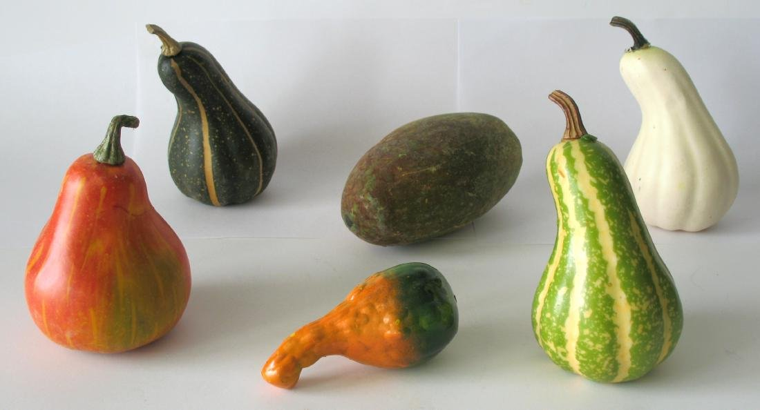 Group of Vintage Country Store Display Gourds