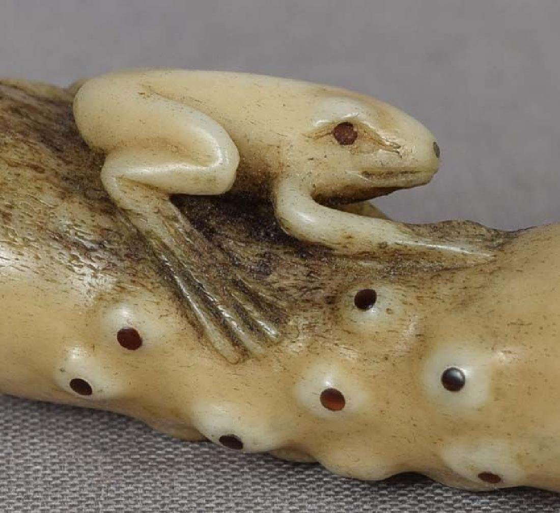 19c Asakusa staghorn netsuke FROG on CUCUMBER by RENSAI - 6