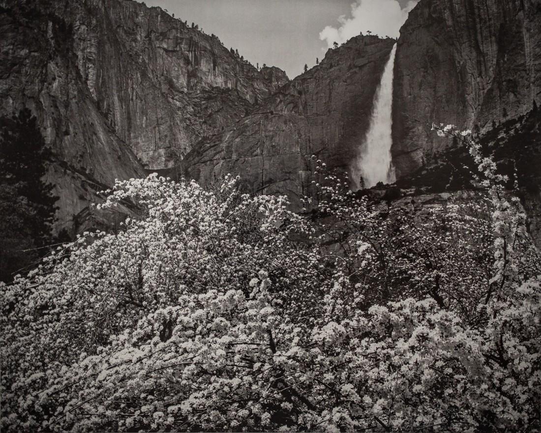 ANSEL ADAMS - Yosemite Falls & Apple Blossoms, Yosemite