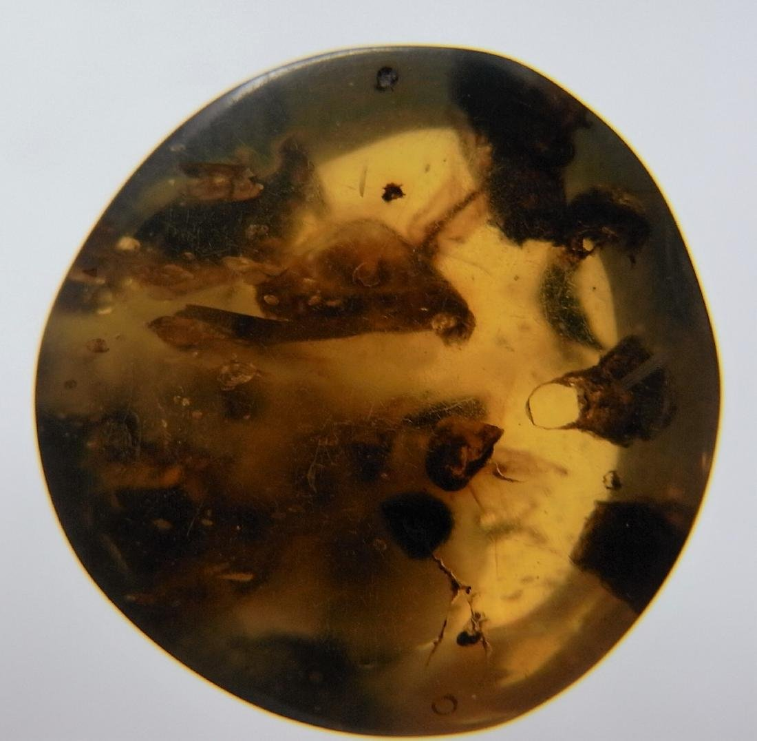 100 MILL YEARS OLD BURMITE AMBER WITH INSECT INCLUSION - 2