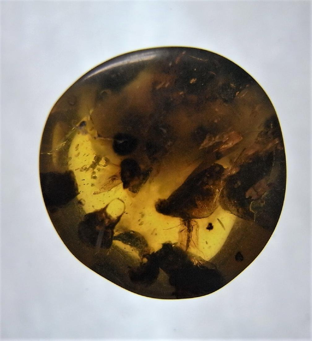 100 MILL YEARS OLD BURMITE AMBER WITH INSECT INCLUSION - 7