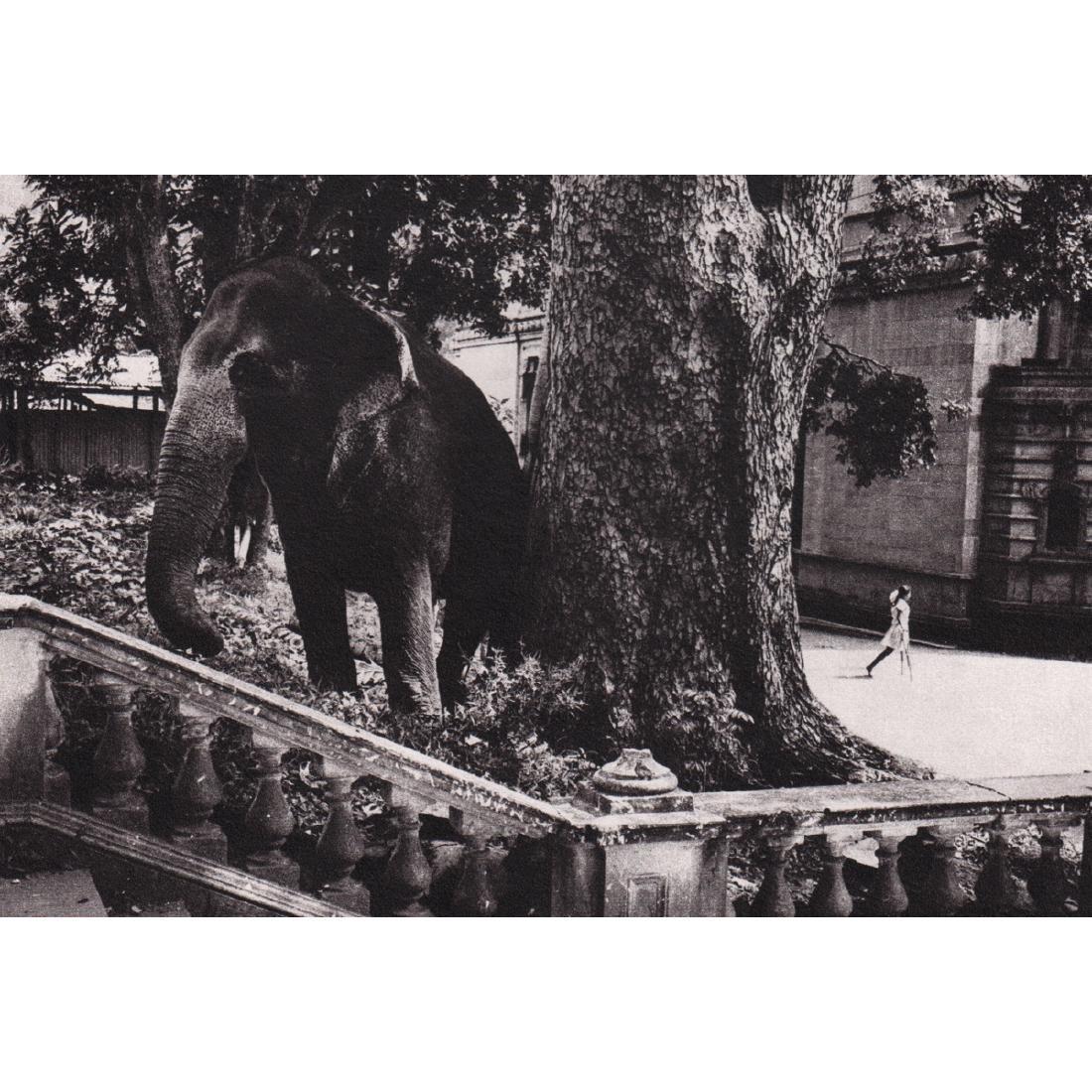 DJAN SEYLAN - Sri Lanka, 1975