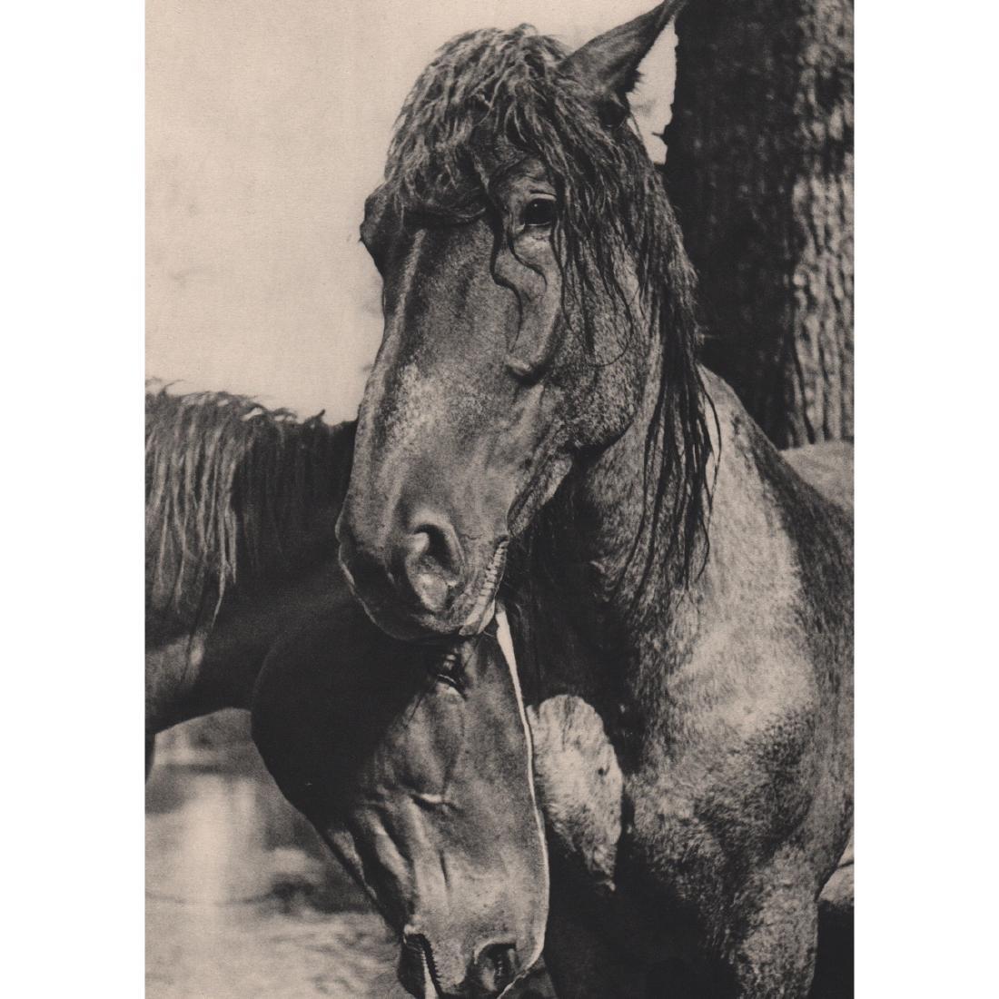 YLLA - Horses