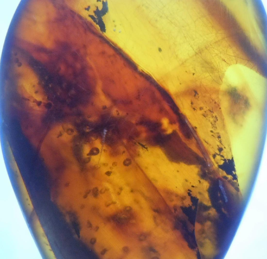 100 MILLION YEARS OLD BURMITE AMBER WITH INSECT - 10