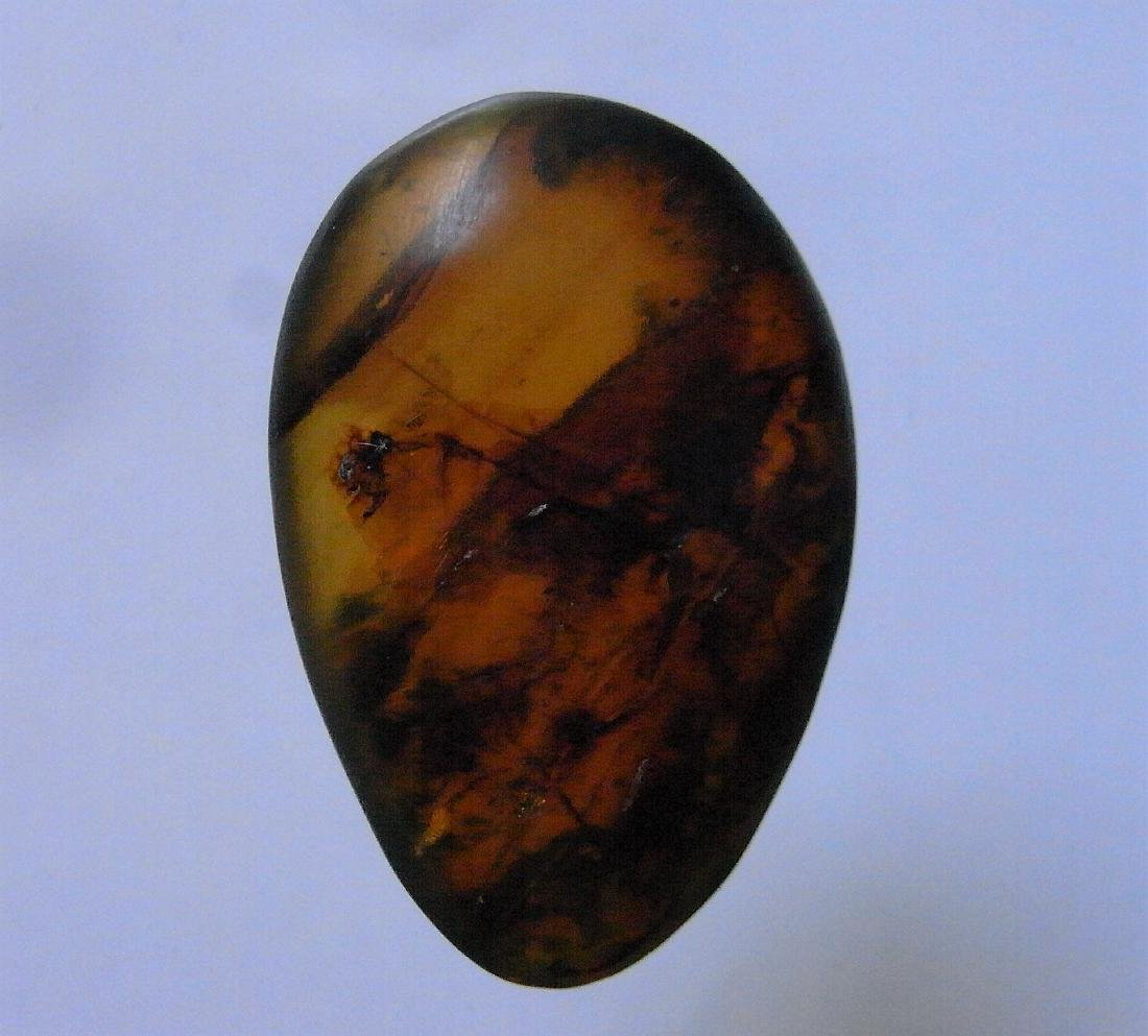 100 MILLION YEARS OLD BURMITE AMBER WITH INSECT - 2