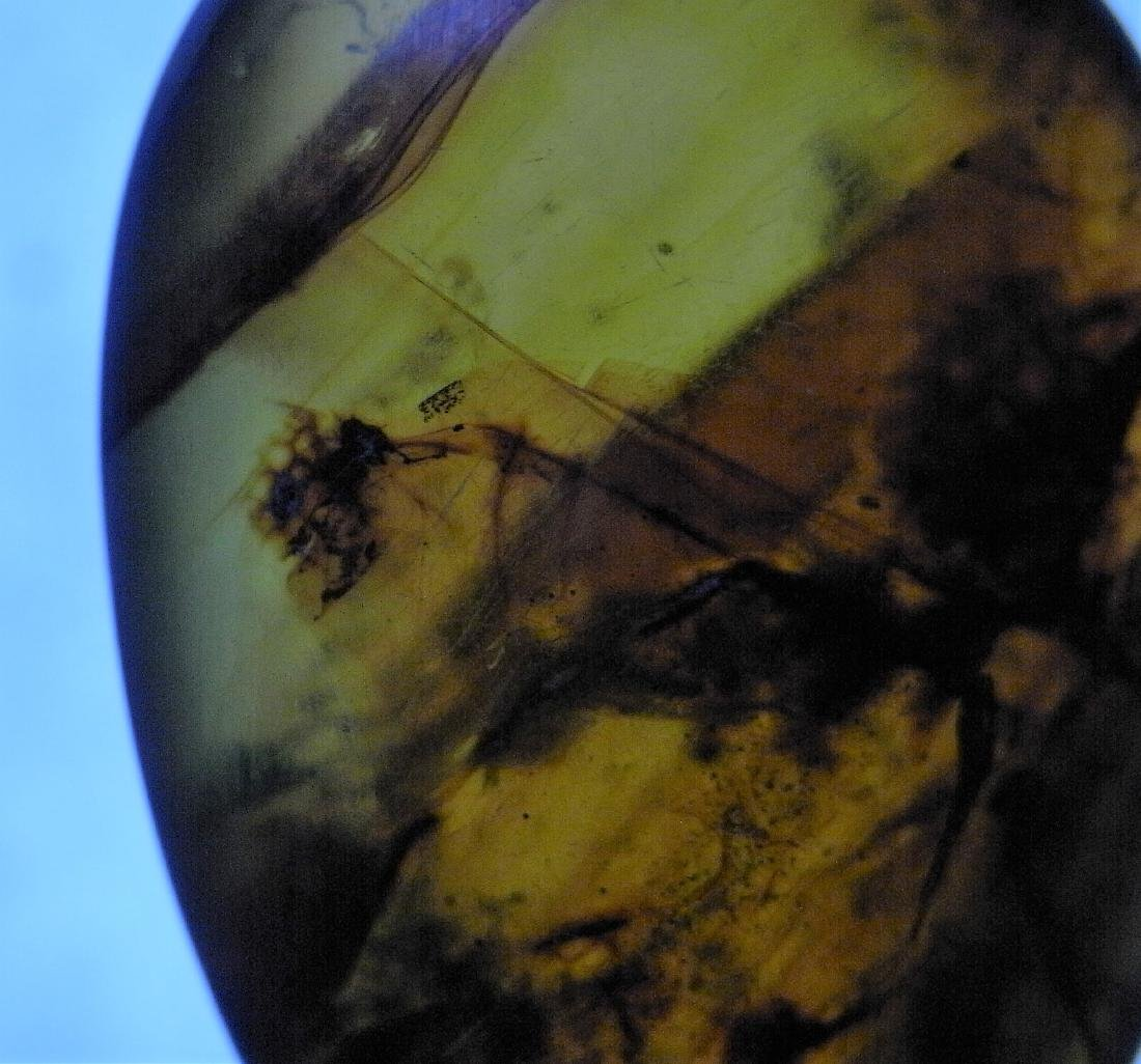 100 MILLION YEARS OLD BURMITE AMBER WITH INSECT - 5